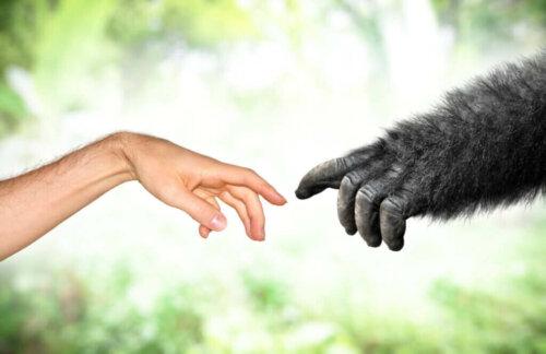 Modern Zamanlarda Lamarckizm: Evrim Teorileri