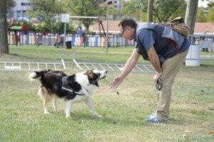 Zehir tespit eden köpek Albatrox