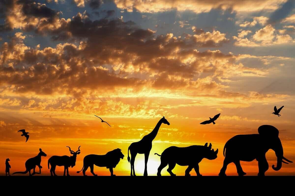 hayvanlar, evrim, darwin