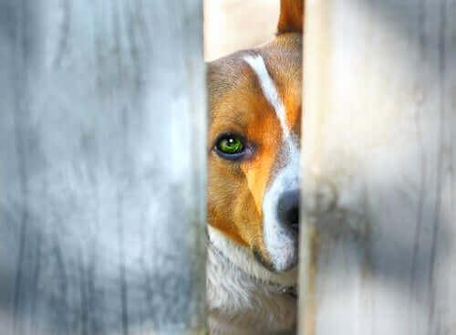 Hayvan Haklarına Dair Kolombiya'da Yaşanan Gelişmeler