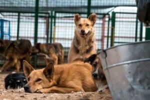 Barınakta yaşayan sokak köpekleri