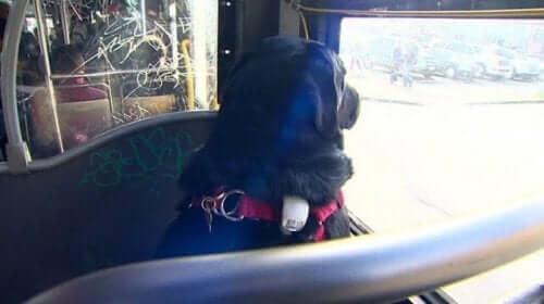 Parka her gün otobüsle giden köpek