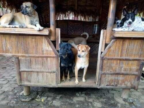 Çardağın için beş köpek