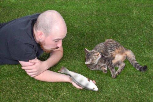 Bir Kedinin Sosyal Etkileşimi ile İlgili 4 İlginç Gerçek