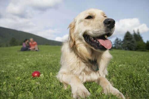 Köpeklerle Kadınlar Mı Daha İyi Anlaşır Erkekler Mi?