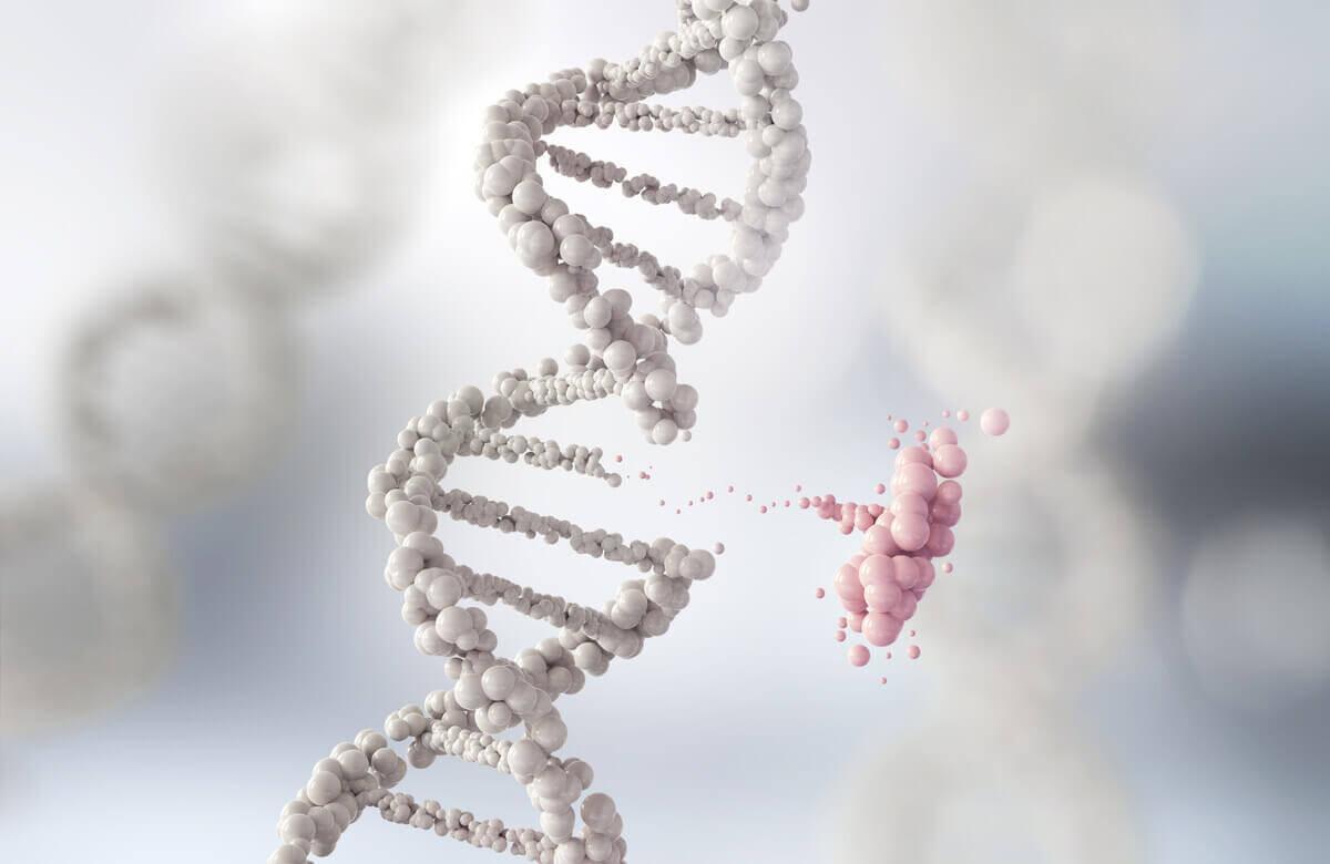 genetik yapı, evrim, doğal seçilim
