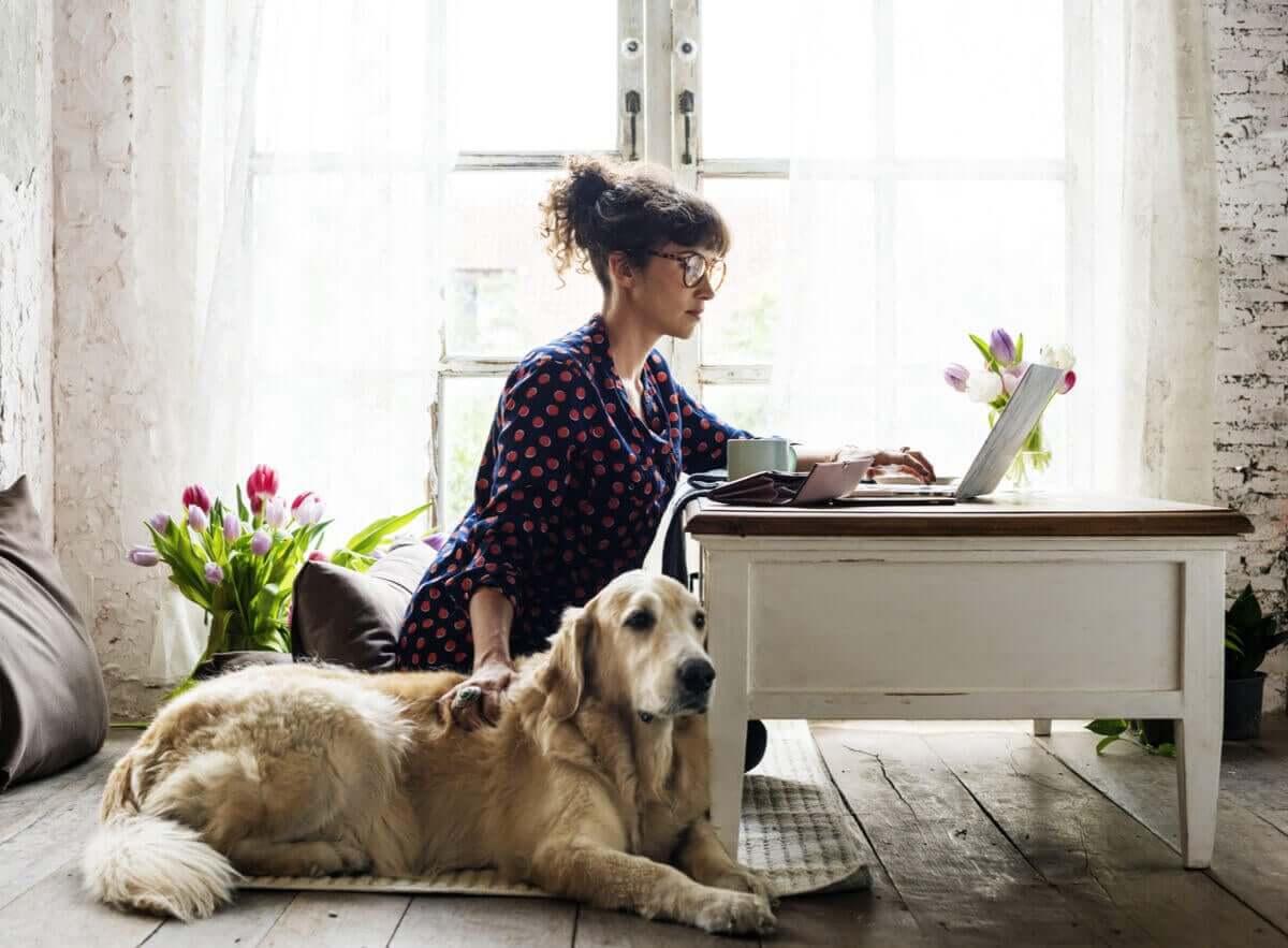 köpekler, tedavi ve bakım
