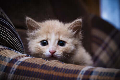 koltuktan fotoğraf makinesine bakan korkmuş yavru kedi