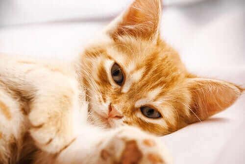 fotoğraf makinesinin önüne yatmış tor tor yapan kedi
