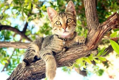 kediler tırmanma