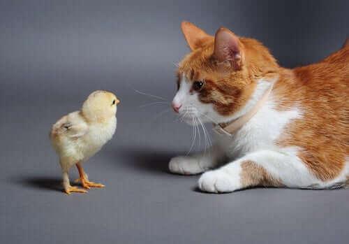 Kediler Kuş Gördüklerinde Neden Ses Çıkarırlar?