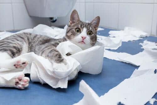 kediler, kedi, yere fırlatmak