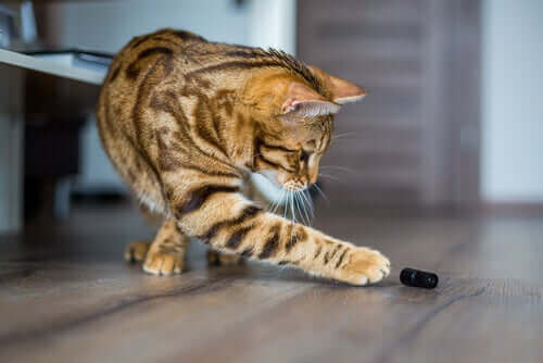 Kediler Eşyaları Yere Fırlatmayı Neden Seviyor?
