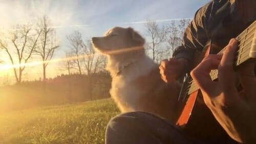 Müzisyen Köpek Maple Herkesin Ruhuna Dokundu