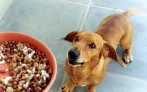 Köpeğiniz yemeğini saklıyorsa ne yapmalısınız?