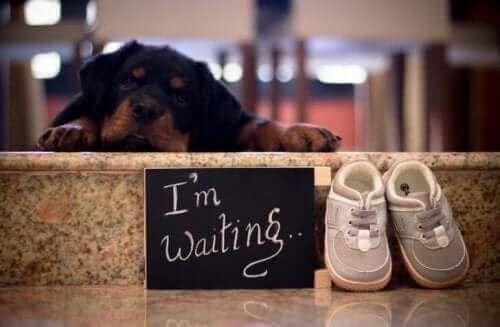 Köpekler ve Bebekler: Ebeveyn Olacak Çift Ne Yaptı?