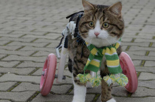 Sokakta gezen protez bacaklı bir kedi.