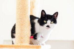 Tırmalama tahtası ve kedi