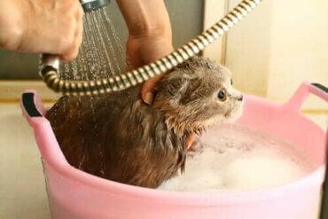 Kedi Yıkamak: Hangi Sıklıkta Yıkamalısınız?