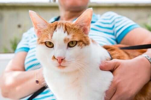 Kediler, Sahiplerinin Arkadaşlığını Sever