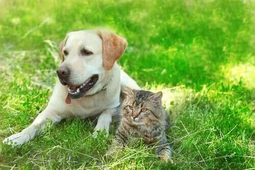 Kediler ve Köpekler Dost Olabilir mi?
