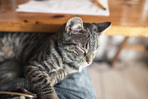 Kedilerde Zehirlenme ve Yapılması Gerekenler