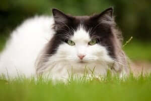 Kedilerde zehirlenme ve yapılması gerekenler.