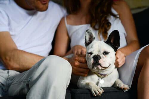 Koltukta sahipleri tarafından sevilen küçük köpek