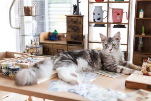 Kediler Hakkında Kesinlikle Seveceğiniz 5 Kitap