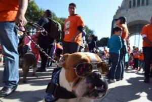 Meksiko geçidi ve bir bulldog