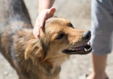 Şehrinizde Nerede Bir Köpek Sahiplenebilirsiniz?