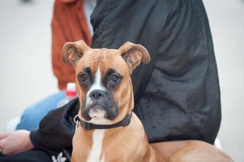 Köpekler için Nöral Terapi: Yeni Bir Bütünsel Alternatif