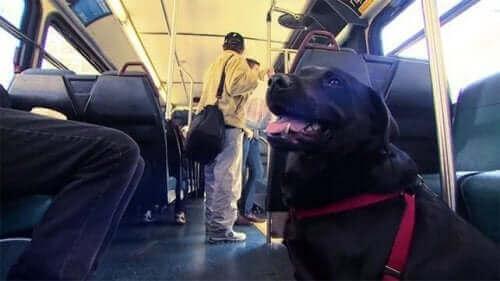 Parka Her Gün Tek Başına Gidip Gelen Köpek