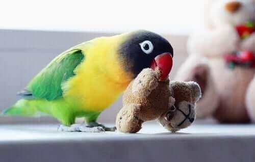 Cennet Papağanı İle Aynı Evde Yaşamak Nasıl Bir His?