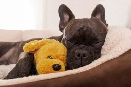 Köpeğiniz İçin Köpek Etolojisi Danışmanlığı Alın