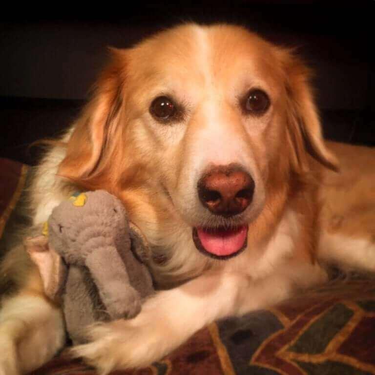 Müzisyen köpek ve fil oyuncağı