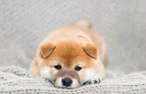 cins köpeklerin özellikleri, köpekler, cins köpekler