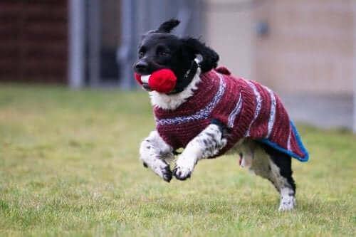 Evsiz Siyah Köpekler için Kazaklar
