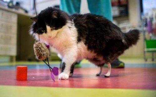 Biyonik Kediler: Engelli Kediler için Protez Bacaklar