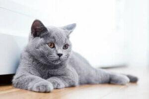 Rahatlamış bir kedi