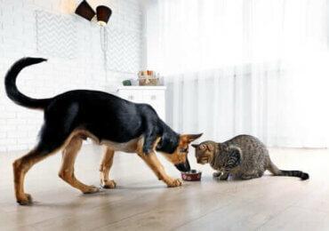 Kediniz ya da Köpeğinizi Rahatsız Etmekten Nasıl Kaçınabilirsiniz