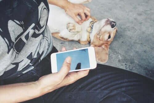 Evcil Hayvanınız İçin En İyi 10 Sosyal Ağ