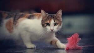 kedi, kediler, kedilerin çıkardığı sesler