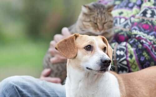 kedi ile dost olan sevimli köpek