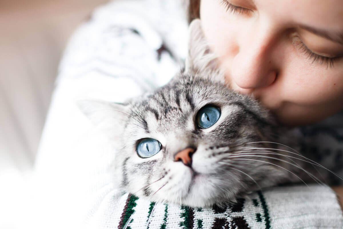 kedi davranışları, uyarıcılar