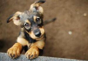 Küçük bir sokak köpeği
