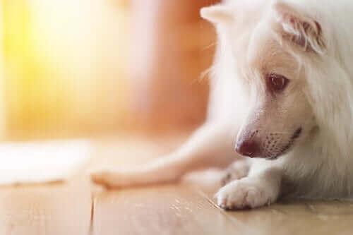 Köpeklerde Şizofreni Hakkında Bilmeniz Gerekenler