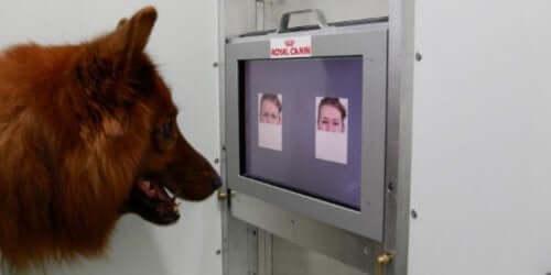 Sahibini tanımayan köpek - yüz tanıma
