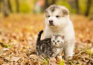 yavru kedi ve köpek dostluğu