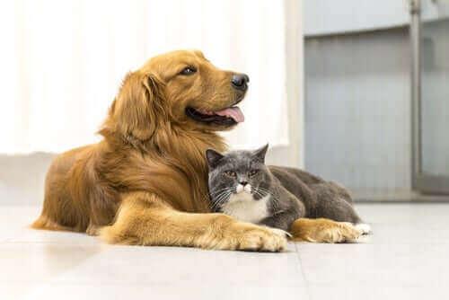 Hayvanlar Bilinçli Varlıklardır, Eşya Değillerdir